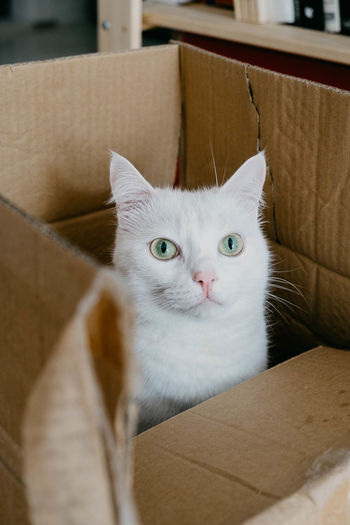 Portrait of cat in box