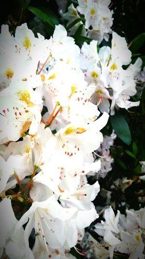 Schönes Wetter Flowers Blumen Natur Nature Im Garten In The Garden *-*