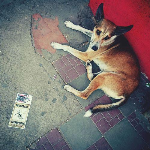Wanted Dog Saddog Note Warningmessage