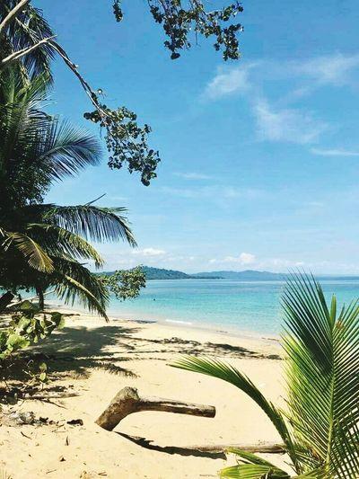 en el mar la Vida es mas sabrosa!!! puerto Limon Costa Rica #Pura Vida Water Sea Sky Beach Tree Land Beauty In Nature