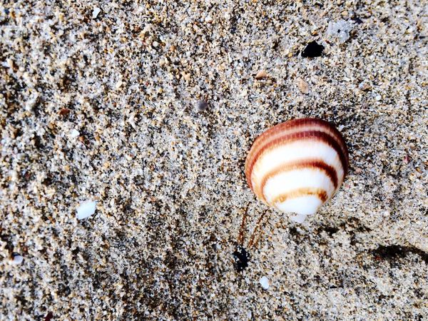 Enjoying The Sun Sea Taking Photos Nature Shells Be Happy Check This Out Make Peace Not War ✌ On The Beach Relaxing