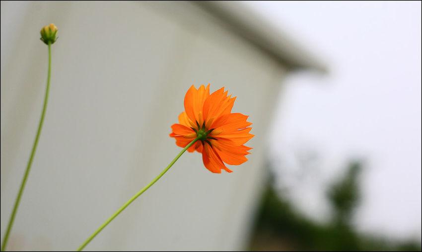 여름휴가 진주 Summervacation Canon 5d Flowers