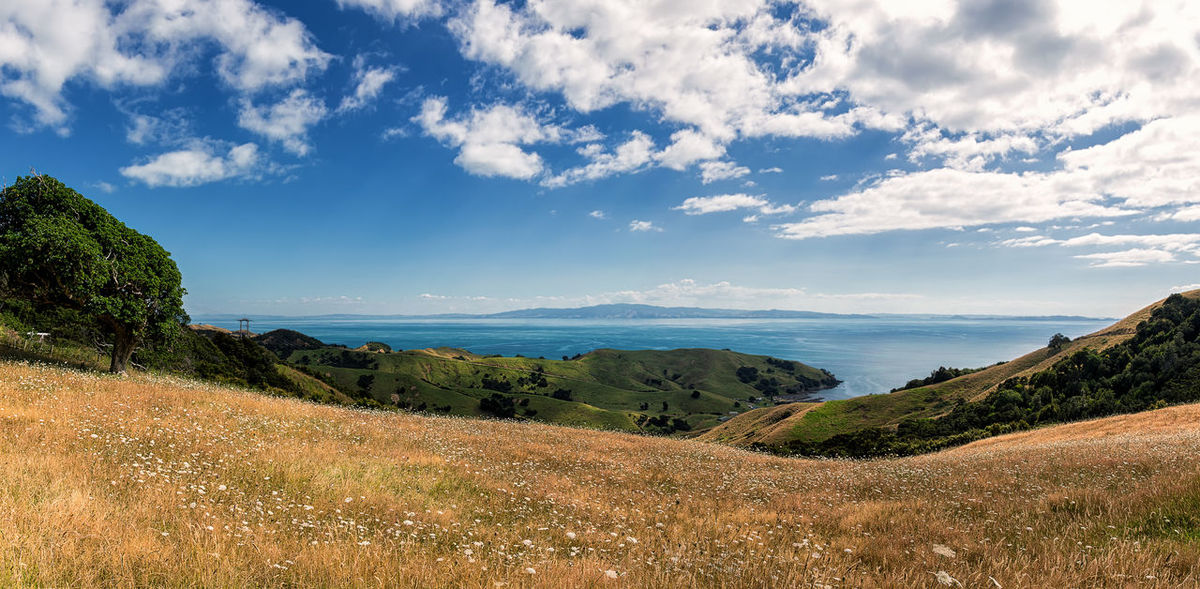 6D Beauty In Nature Cloud - Sky Down Under Grass Growth High Quality High Resolution Landscape Landscape_Collection Landscape_photography Nature New Zealand No People Non-urban Scene North Island New Zealand Ocean Ocean View Outdoors Panorama Panoramic Landscape Scenics Sea Tranquil Scene Water