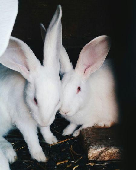 кролики Красотунчики белый любимые глазки