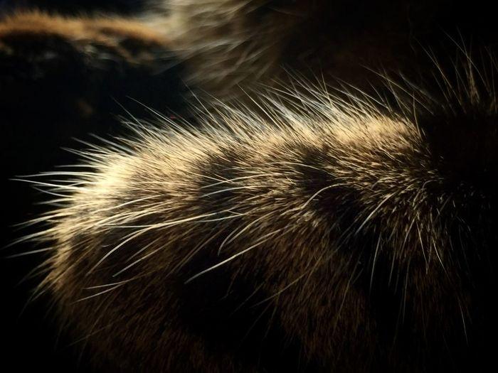 Purry furry Furry Fur Cat Paws Close-up Light And Shadow Macro Kedi Yakınçekim Isik Golge