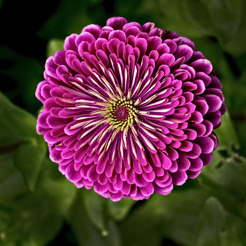 Flower, from