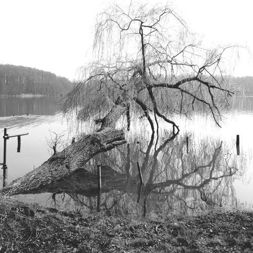 Landscape Fooling Around Black And White Black & White