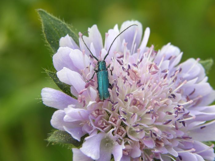 Green Bugs Springtime Wild Flowers Flower Flower Head Insect Purple Close-up Animal Themes Plant