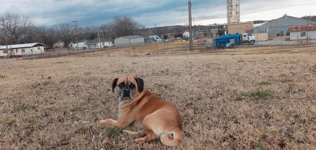 Dog on the land