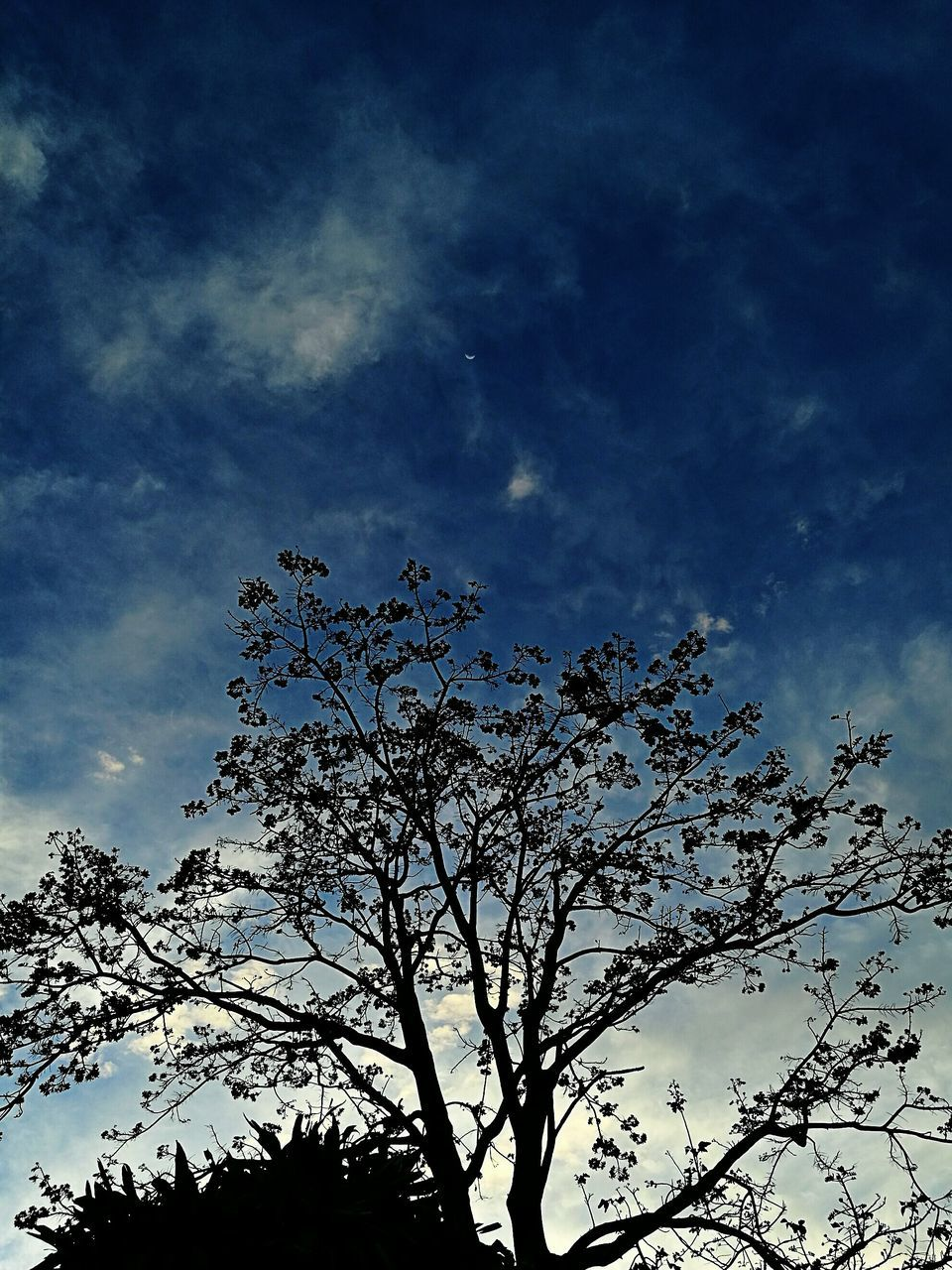low angle view, tree, sky, nature, blue, branch, beauty in nature, outdoors, no people, day