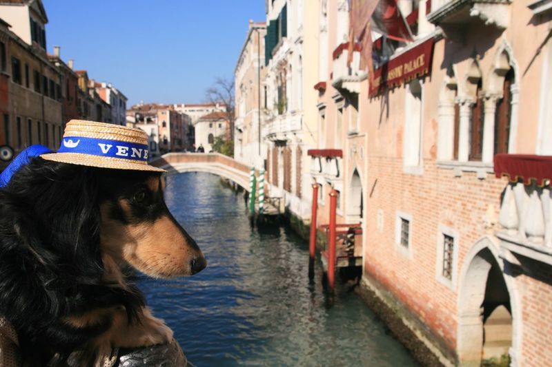 Dog in canal on the bridge