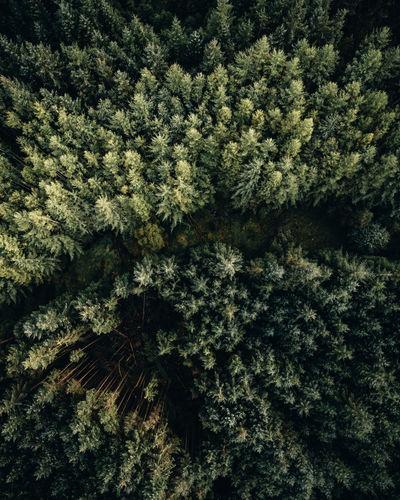 Full frame shot of snow covered plants