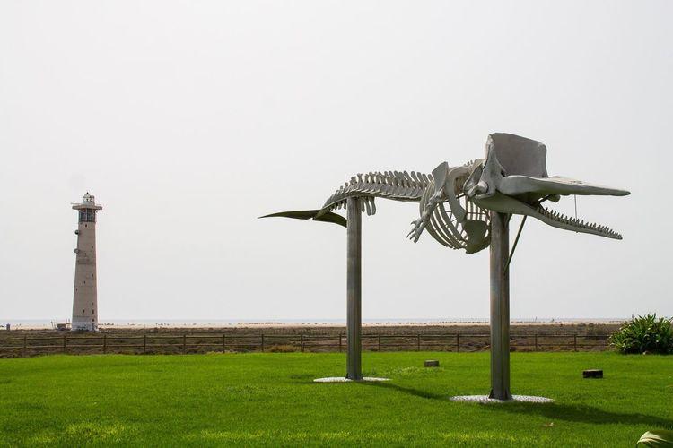 Fuerteventura Morro Jable Jandia Islas Canarias Canary Islands Kanaren Kanarische Inseln Whale Wal Ballena Skelett Esqueleto Skeleton Pottwal Sperm Whale  Cachalote Leuchtturm Faro Lighthouse Adapted To The City
