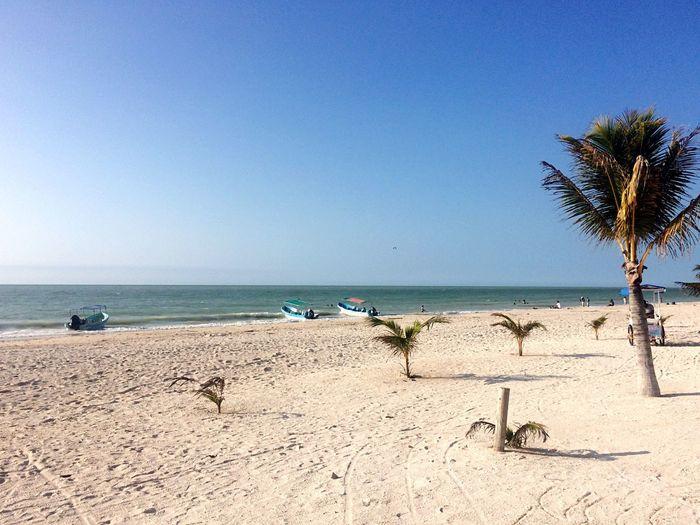 The Essence Of Summer Celestun Sea Beach Tranquility Sand Caribbean