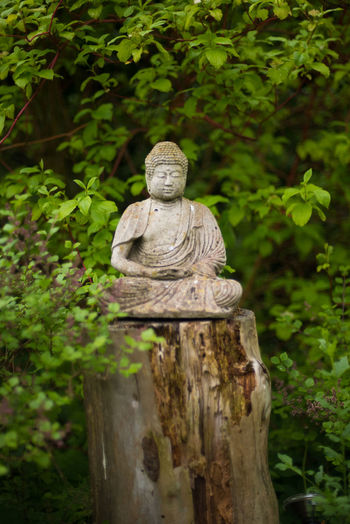 Finding inner peace Buddha Faith Nature Buddha Statue Close-up Greenery Human Representation Inner Peace Monk  Nature No People Outdoors Peaceful Religion Sculpture Statue Tree