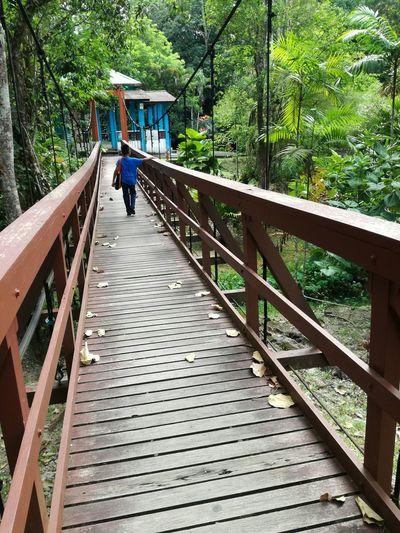 Man on footbridge in forest