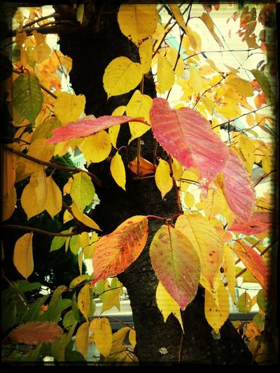 Autumn leaves. End of autumn