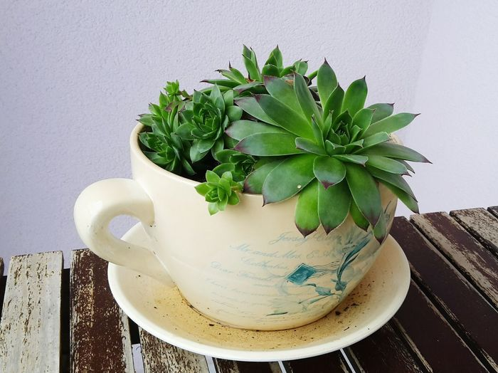 Close-Up Of Potted Succulent Plant In Cup On Table