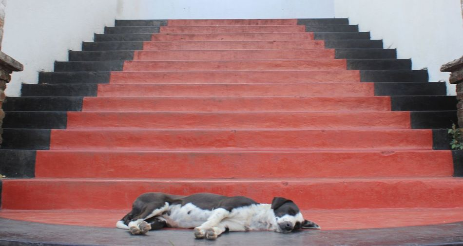 Stair to tempel, dog is god
