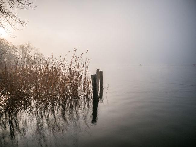 #fog #Lake #reed