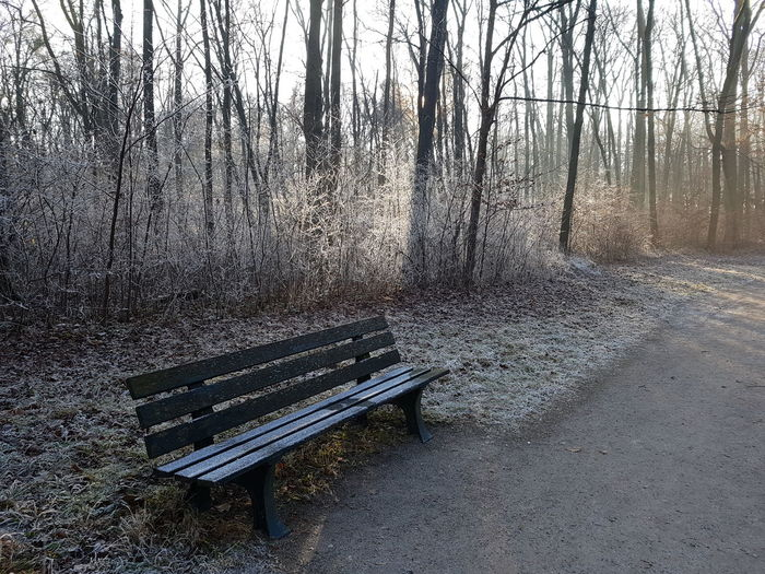 Nymphenburg Park Bare Tree Bavaria Beauty In Nature Bench Day Frost Hoar Hoarfrost Munich Nature No People Outdoors Park - Man Made Space Scenics Seat Snow Tranquility Tree Winter