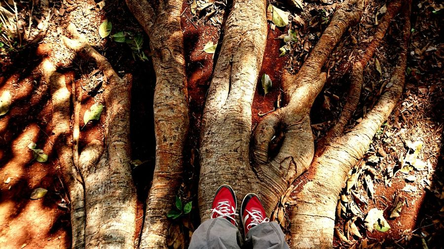 Like big trees have big roots... To be a strong person you need strong foundations. Silvia In Myanmar Trees Travelling Life Roots