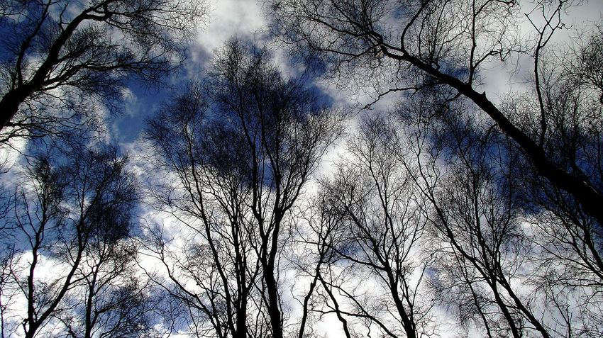 Tree Nature Sky Beauty In Nature Branch Scenics Walking Around Outdoors Bare Tree Ladyphotographerofthemonth Martin Mere Blue Sky
