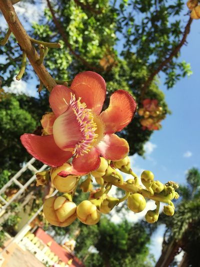 Growth Tree Low Angle View Nature Day Outdoors No People Beauty In Nature Freshness Food Close-up Sky Sara Flower Head