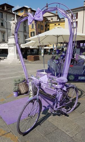 Bicycle No People City Brescia, Italy Brescia Loggia Bresciacentro Brescia_foto Lavanda Lavander Flowers