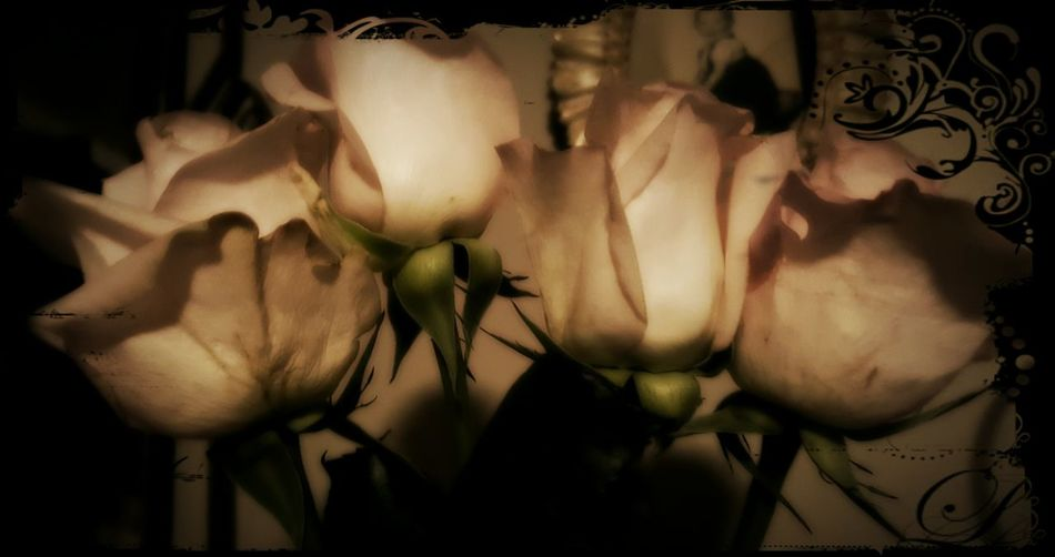 My roses.. Purdy Luckygal Yay Mine My Thang Roses