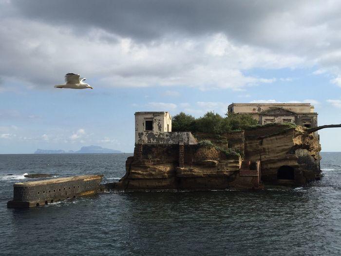 Seagull flying by gaiola island in sea