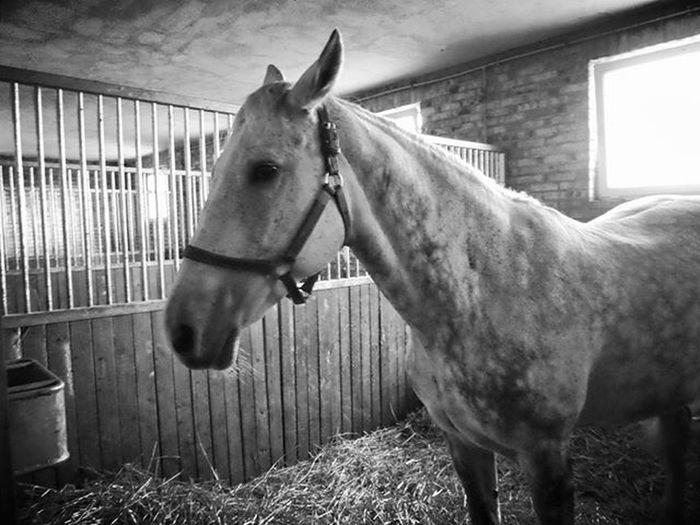 Koń jaki jest, każdy widzi Stadnina Gronówka Horse