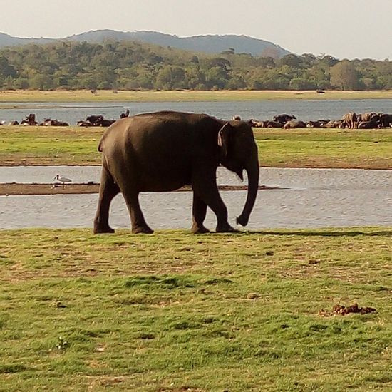 Animal Elephant Animal Wildlife Water Animals In The Wild Mammal Nature No People Beauty In Nature Landscape Outdoors