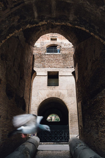 Ancient Architecture Coliseum Moving Around Rome Past Travel Ancient Civilization Arch Architecture Bird Built Structure Colosseum Flying History Indoors  Low Section Pigeon Travel Destinations