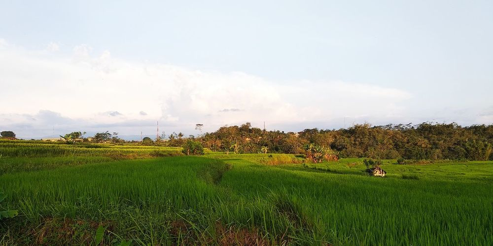 Sky Skylight EyeEm Best Shots No Filter, No Edit, Just Photography No People Outdoor Outdoor Photography Mountain View Panorama Bonding Moments Happy Moments Beauty In Nature Evening Sky Paddy Field EyeEm Selects Agriculture Rural Scene Field Sky Grass Plantation Rice Paddy Rice - Cereal Plant Irrigation Equipment Farm