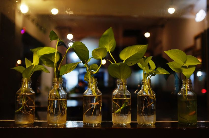 DIY Green Color Growth Plant Vase Bottle Close-up Day Decoration Fish Illuminated Indoor Indoors  Leaf Night No People Small Fish Vine