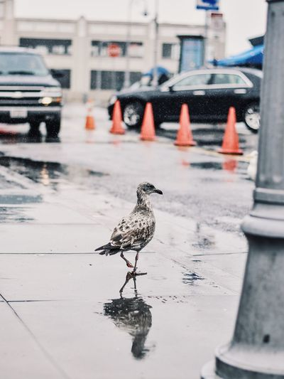 Bird Animal Themes Animal Wildlife Animals In The Wild One Animal Water Built Structure Outdoors Wet No People Building Exterior Perching Puddle Day Architecture Sparrow Streetphotography Street Photography Street