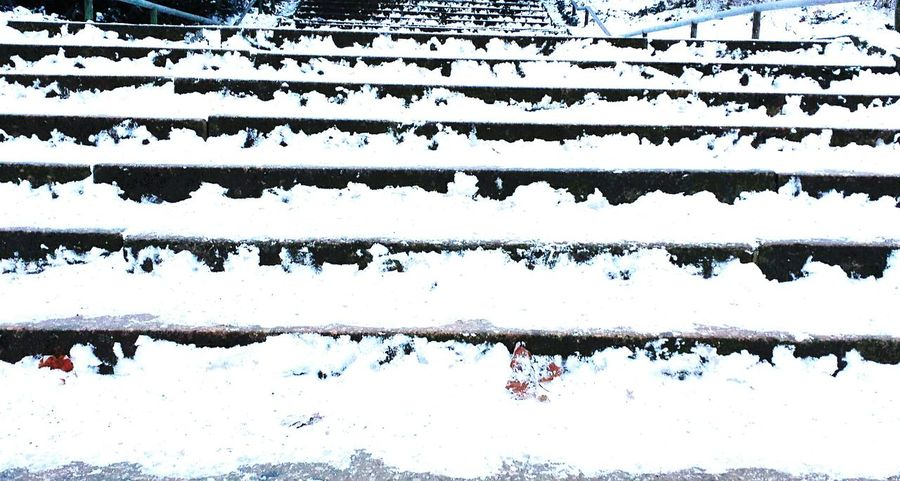 Winter in Berlin Treppen Stairs Escaleras Enjoying Life Winter Stairs Showcase: January AMPt_community Geometric Shapes Popular Photos Samsungphotography EyeEmBestPics Tadaa Community EyeEm Best Shots Schnee Snow Creative Power EyeEm Nature Lover Frosen Winter Wonderland Winter EyeEm Masterclass Smg Treppen
