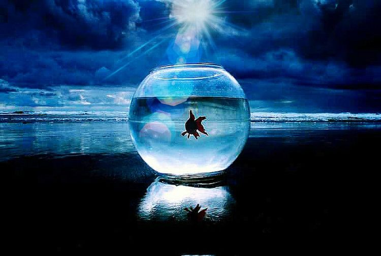 Outdoors Seascape Photography Fish Bowl Nature Reflection Water