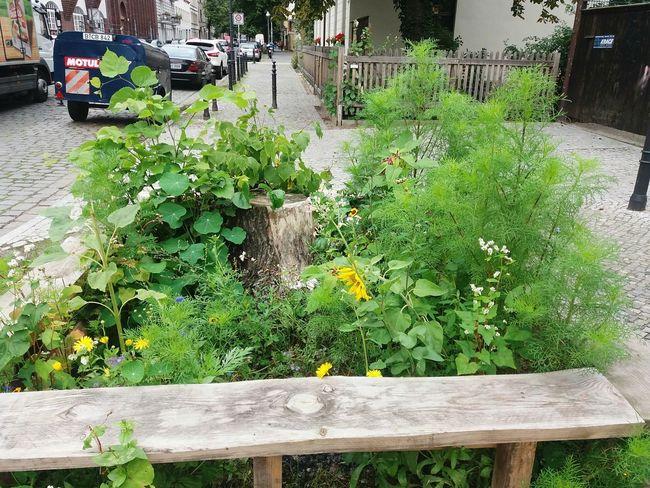 miniature garden in Neukölln Richardstr. Outdoors Day Growth Plant Nature Outdoors Photograpghy  Rest Flower No People Nature In Neukölln Green Color Streetphotography Urban Green Urban Gardening