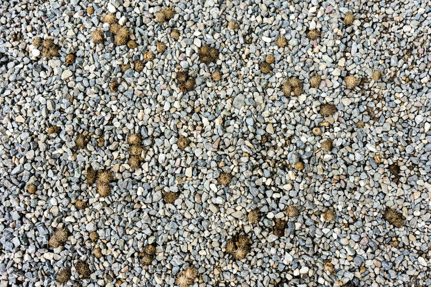 Abundance Animal Themes Backgrounds Beach Close-up Day Directly Above Full Frame Large Group Of Objects Nature No People Outdoors Pebble Pebble Beach Rock - Object Sea Life Shingle Shingle Street Textured