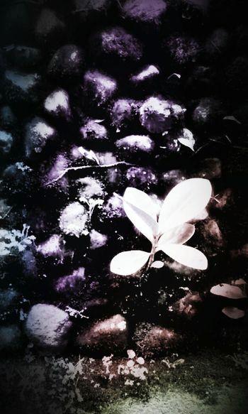 Nacer..Colored Stones Wall PiedrasNegras Plants Luz Colors Edited Crecer Growing Plants Looking Fotoedit Color Portrait