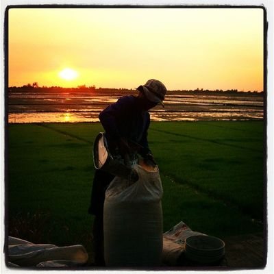 Bread of life. Bulakenyo Farmer Sunset Sunsetlover Bulacan Philippines @photosharingsunsets