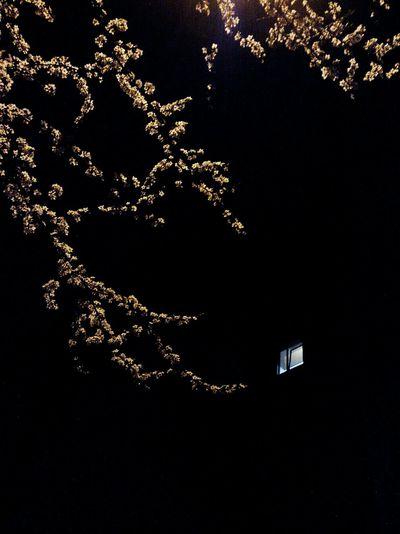 After Dark Night View Night