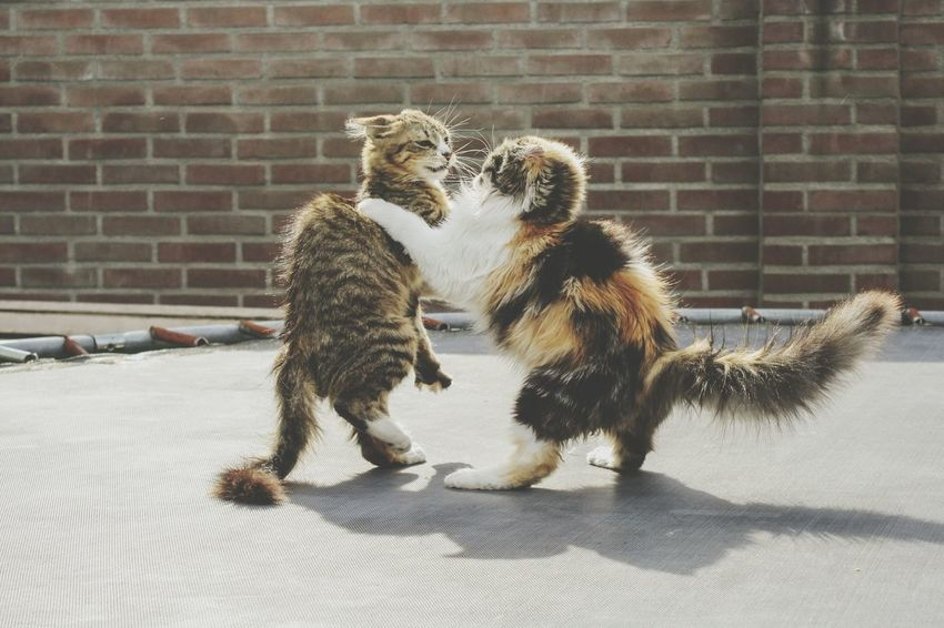 Beauty In Nature Cat Cats Kitten Kittens Cute Fight Fighting Play Playing Cats Playing Friends Spring Nature Photography Cat Photography Meow Animal Themes Animal Beautiful Pets Togetherness Brick Wall Domestic Cat Cat Feline At Home Tabby Visual Creativity