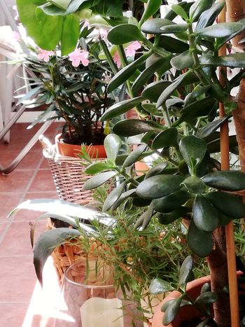Balcony Flower My Balcony Garden Terrace Gardening Balcony Shot Balcony Garden Small Paradise Potted Plants Plants And Flowers Plant Photography Tree Close-up Plant Succulent Plant Aloe Growing Potted Plant Pot Houseplant Aloe Vera Plant