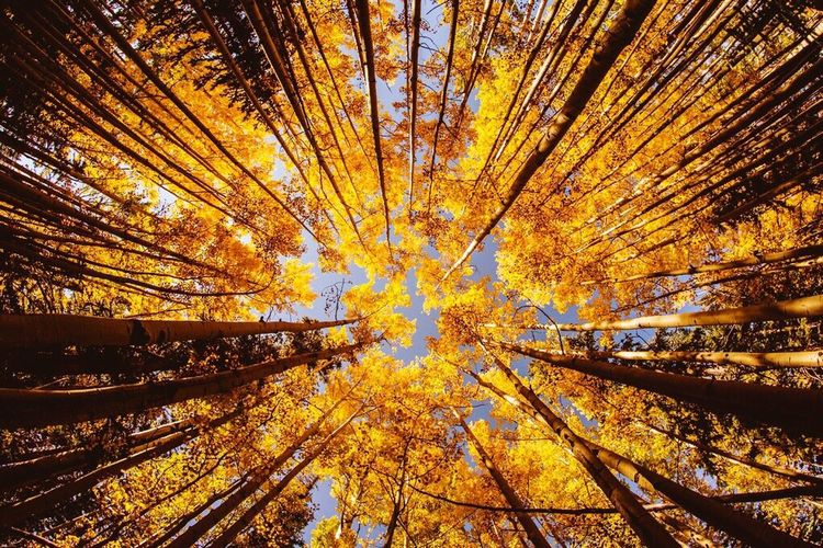 Rising up Fisheye Tree Plant Autumn Beauty In Nature Nature Low Angle View Orange Color Forest No People Outdoors Tranquility