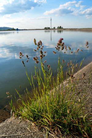 Beach Beauty In Nature Cloud - Sky Day Grass Growth Jezioro Bielawskie Lake Lake View Land Lower Silesia Nature No People Non-urban Scene Outdoors Owl Moutains Plant Reflection Scenics - Nature Sky Tranquil Scene Tranquility Water