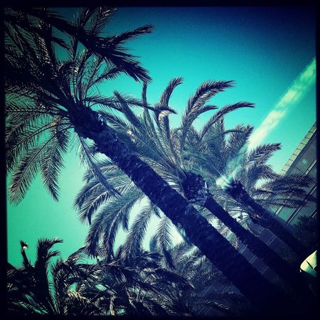 Show Me Your Compassion. Blue Sky Palm Trees