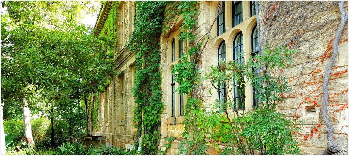 Arch Window Architecture Building Exterior Crawlers Exterior Greenery Historic NEDLANDS University Of Western Australia